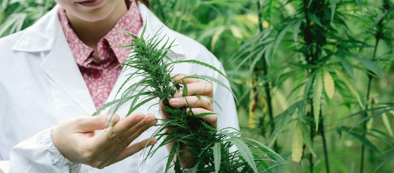 wat-zijn-cannabinoid-acids